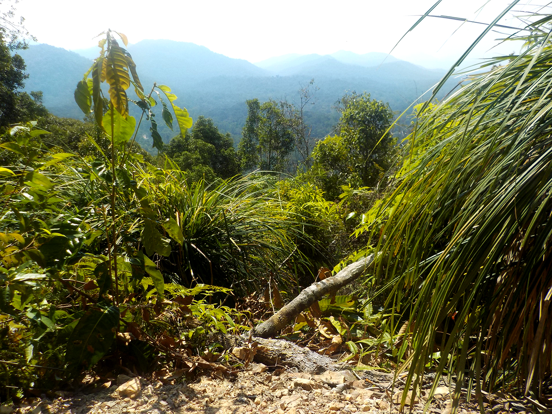Travel Diaries: KL Forest Quest, Part 2